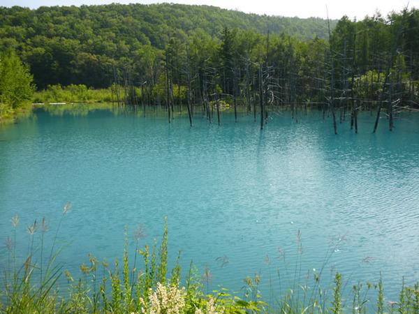青い池A.jpg